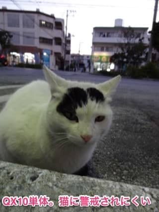 20140123-cat